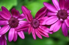 spring-in-british-columbia